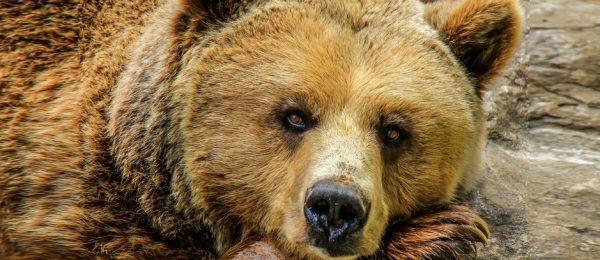 How to defend against bear hugs in Krav Maga