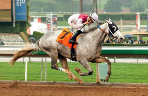 Calculator Won Easily in the Grade 3 Sham Stakes (Santa Anita/Benoit Photo)