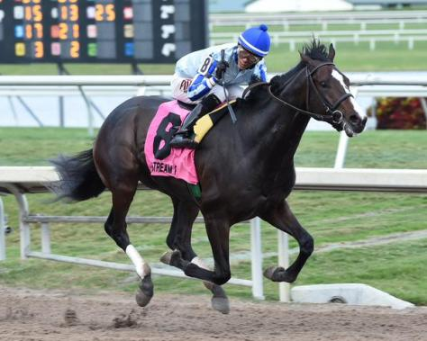 Upstart crushed the competition in the Holy Bull Stakes (Coglianese Photos)