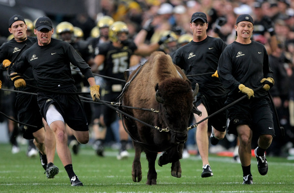 Colorado will get a chance to run Ralphie on the field in 2021 against Texas A&M (Doug Pensinger/Getty Images North America)
