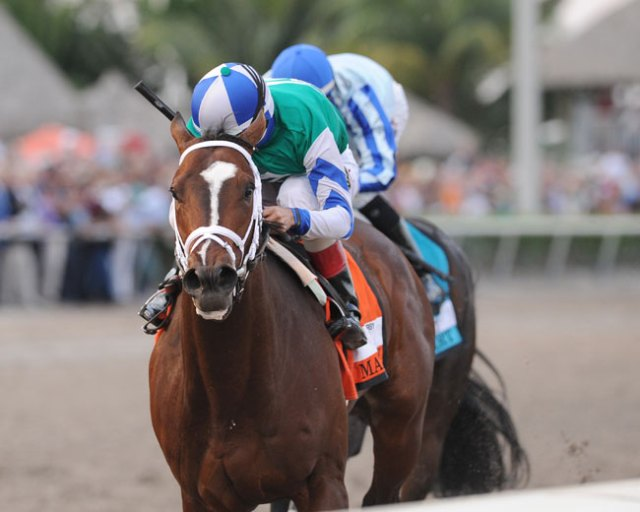Materiality holds off Upstart to win the Grade 1 Florida Derby (Photo: Kenny Martin, Coglianese)