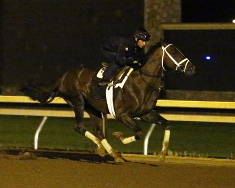 Carpe Diem working out on Saturday, April 25, 2015 (Keeneland Photo)