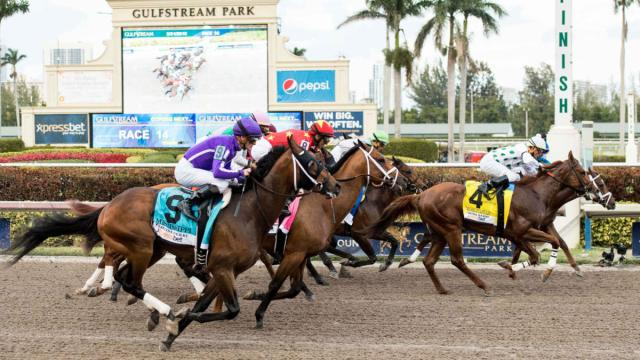 Gulfstream Park Pick 4 odds, top predictions: Proven handicapper ...
