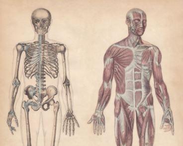 難解な解剖学を誰にでも分かりやすく解説!エクササイズの正しいプランニングができるようになるための身体の構造が学べるワークショップを2019年11月、2020年1月に開催!