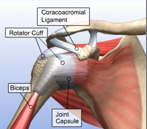 Understanding Partially Torn Rotator Cuff Repair