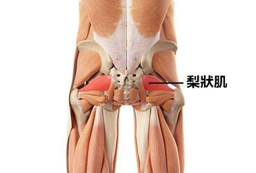 梨狀肌癥候群 Piriformis Syndrome | 運動星球 sportsplanetmag