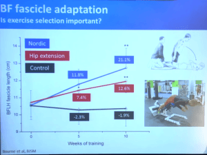 Hamstring Rehab Exercises: Nordic Hamstring Exercise vs Hip Extension for Increasing Muscle Length