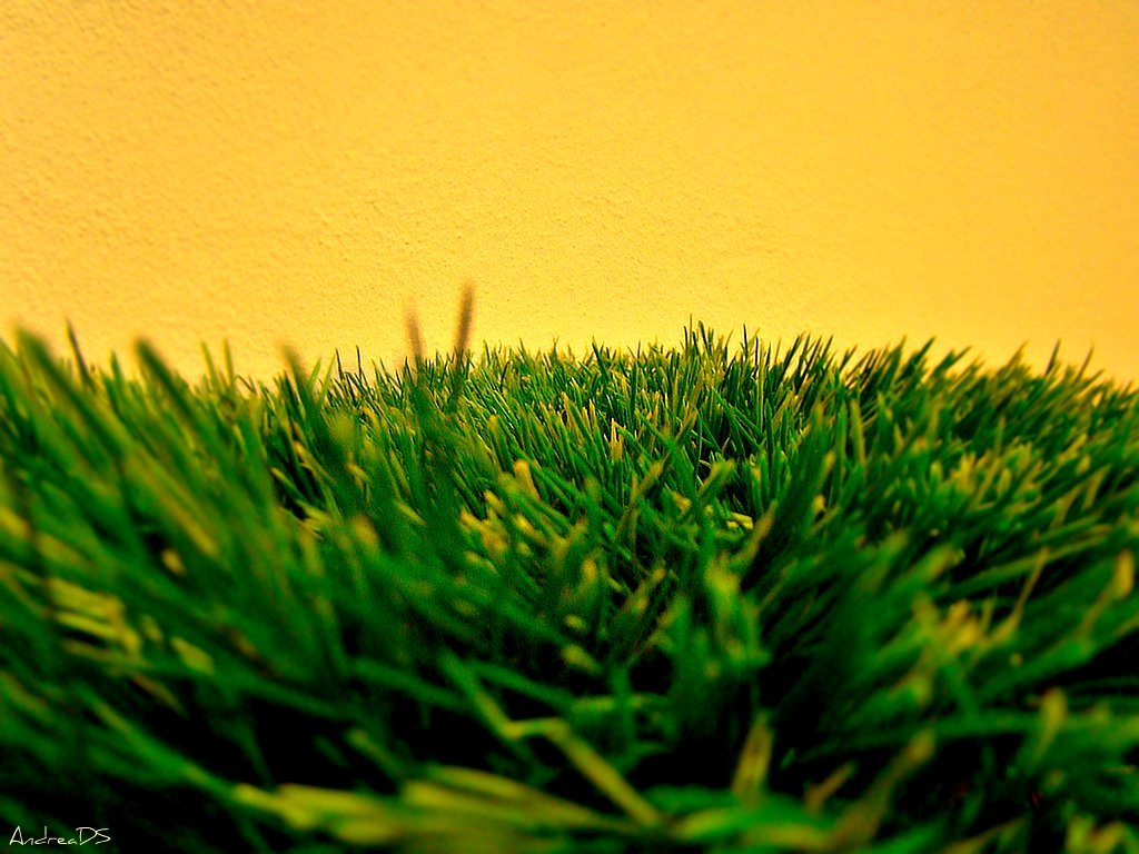 The Truth About Artificial Turf Injuries
