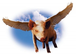flying-pig - Copy