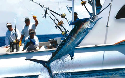 All you want to know about Sport Fishing