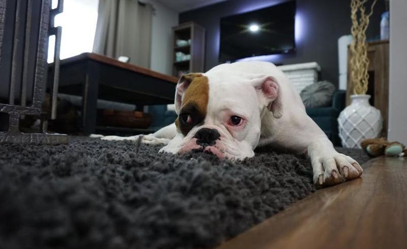 Eşti pregătit să aduci un câine în casă?