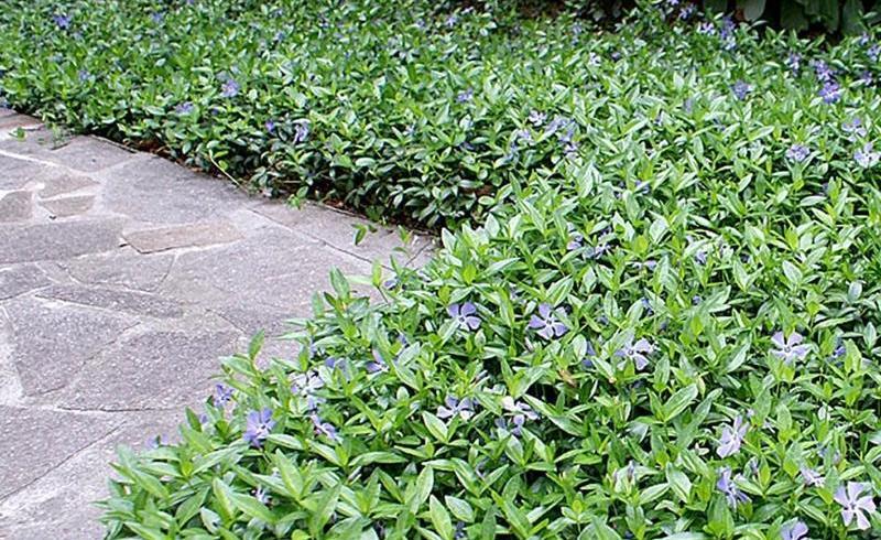 Plante cu flori pentru zone umbroase, frumoase și ușor de întreținut