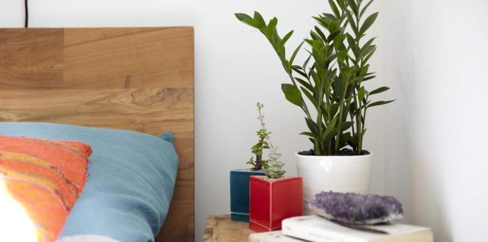 Te-ai gândit să pui plante în dormitor? Uite de ce este o idee foarte bună