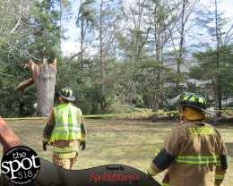 tree down web-9617