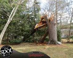 tree down web-9620