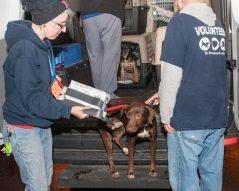 09-07-17 harvey dogs-9189