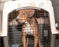 09-07-17 harvey dogs-9190