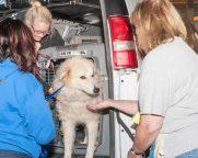 09-07-17 harvey dogs-9277