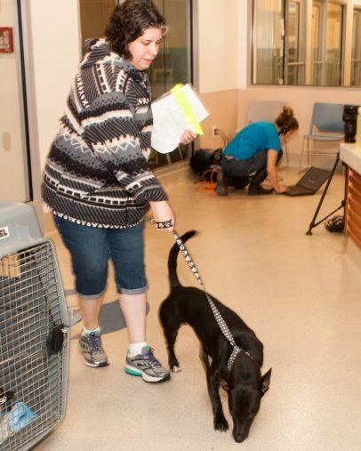 09-07-17 harvey dogs-9358