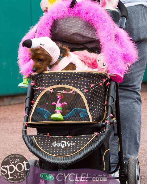 paws in the park-0413