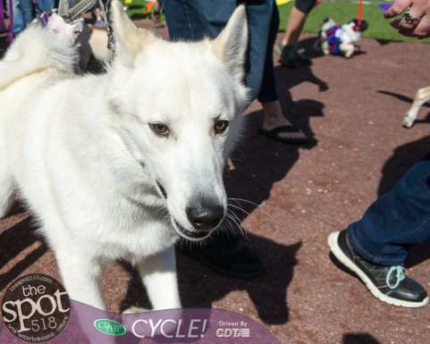 paws in the park-0541