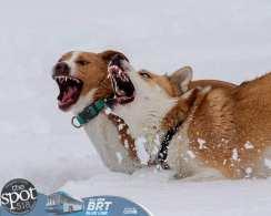 dog park 1-9143