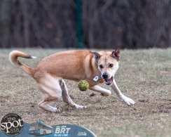 dogpark2-9654