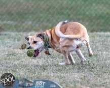 dogpark2-9680