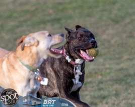 dogpark2-9796