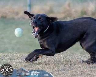 dogpark2-9967
