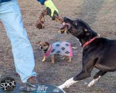 dogpark2-9982