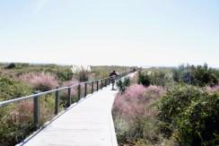 Travel Guide: Charleston, SC - Sullivan's Island - www.spousesproutsme.com