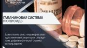 Галаниновая система и опиоиды