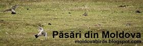 birding moldova