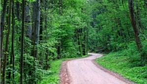 Jazda po alkoholu drogą leśną