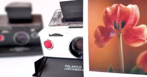 Polaroid SX-70 Landcamera, SX-70 Film, Tulpe, Polaroid