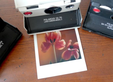 Polaroid SX-70 Land Camera, Tulpe, Photodarium 2017