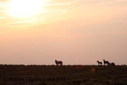 Pintos at sunset