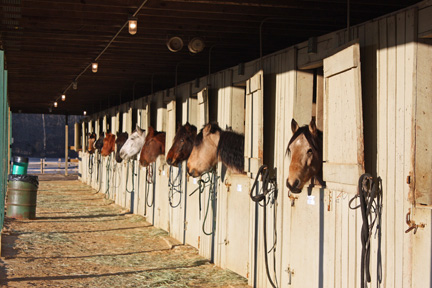 Stable accommodations