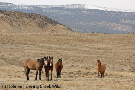 Piedra, Baylee, Aspen, Hollywood and Filly Peak