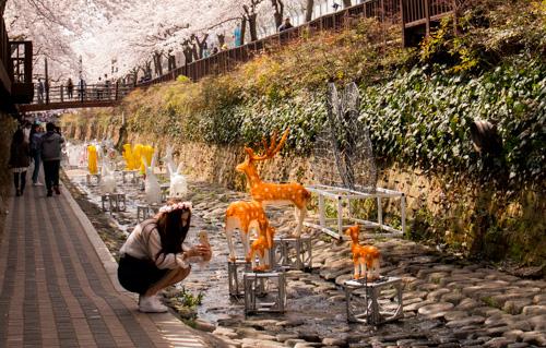 Deers at the bridge - Yeojwa Stream Romance Bridge