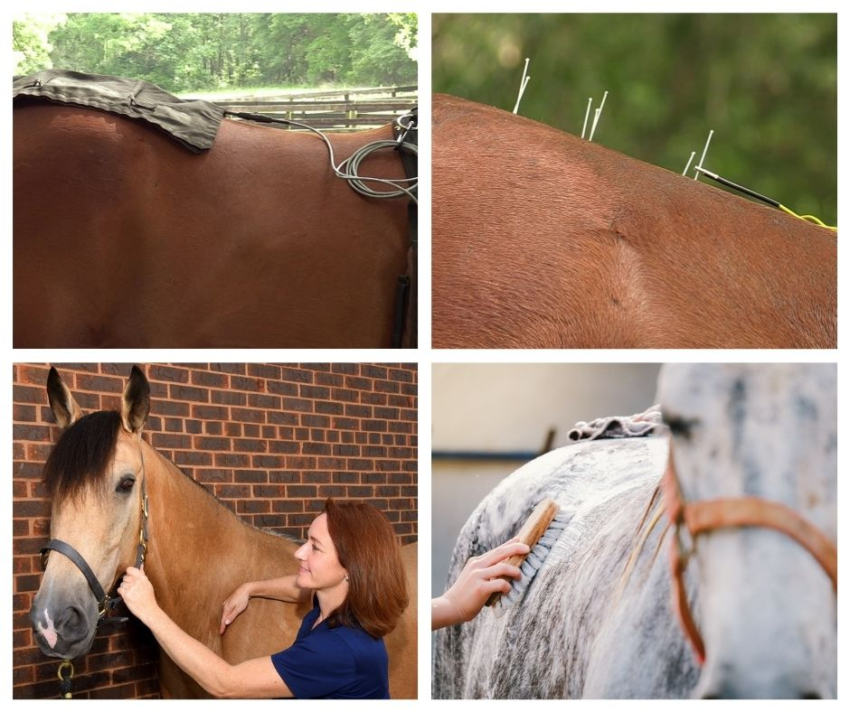 Springhill Equine Veterinary Clinic