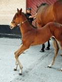 Crooked foals part 2 (Flexural limb deformities)