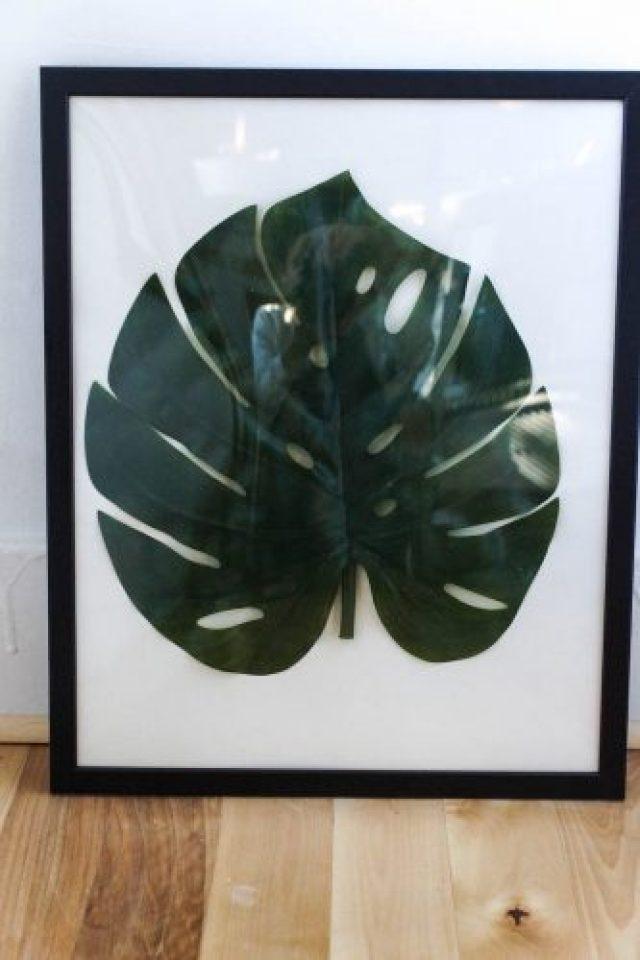 DIY framed monstera leaf