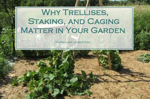 Why Trellises, Staking, and Caging Matter in Your Garden
