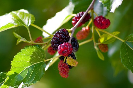 All Around The Mulberry Bush