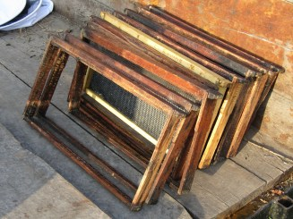 Tiffany removed the drawn comb from these frames to make foundationless frames for one of her hives.