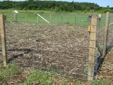"""Our new cattle panel gate. We will probably build a """"fancier"""" gate in the future, but we had the supplies around to build a gate this way, so it was more cost effective!"""