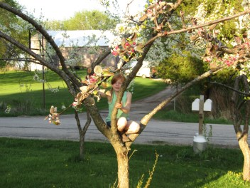 Beautiful apple and plum blossoms. And a little monkey, too!