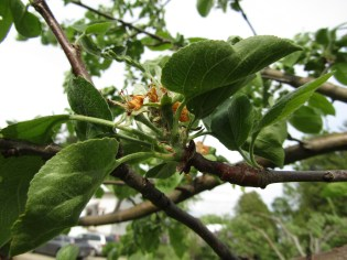 Soon enough fruit begins to form.